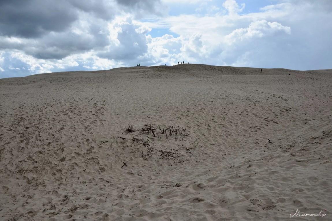 Råbjerg Mile Wüste in Dänemark