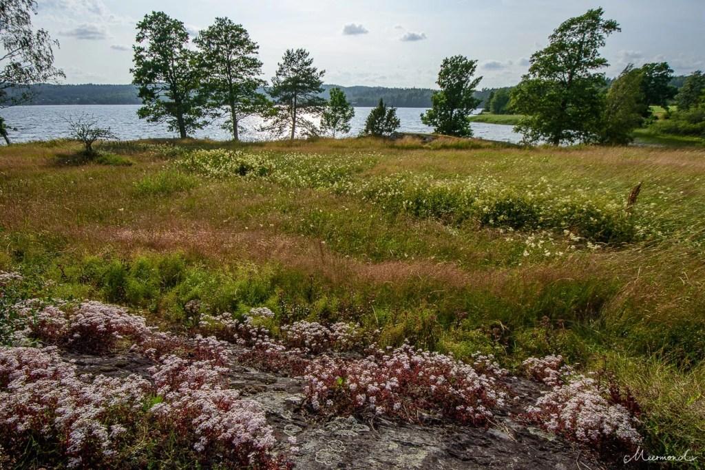Blumen Schweden wild