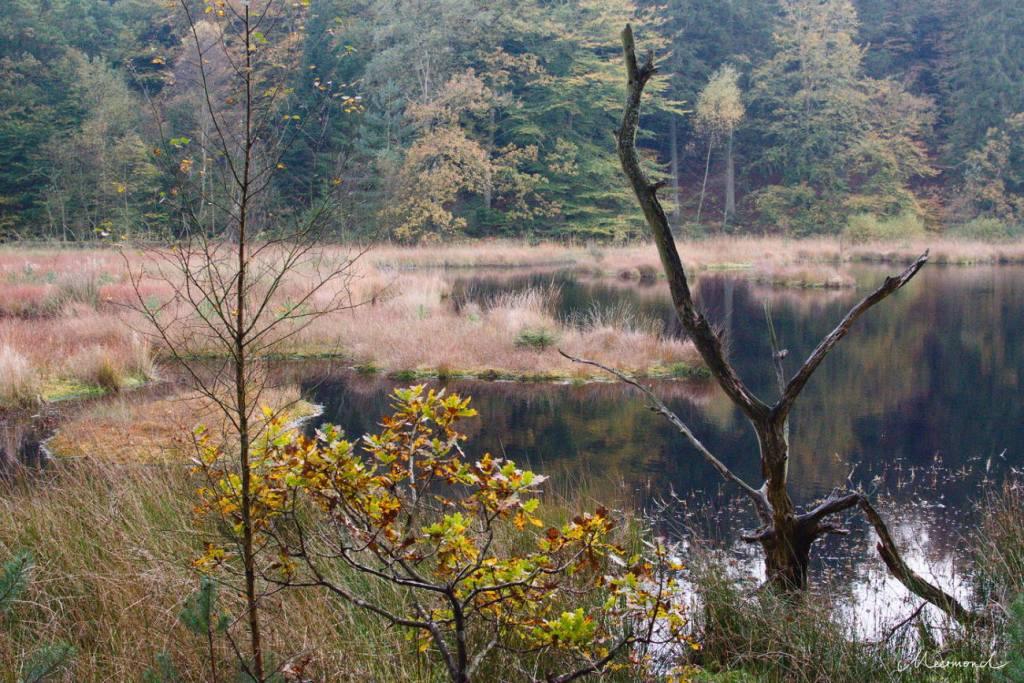 Sømose im Herbstnebel