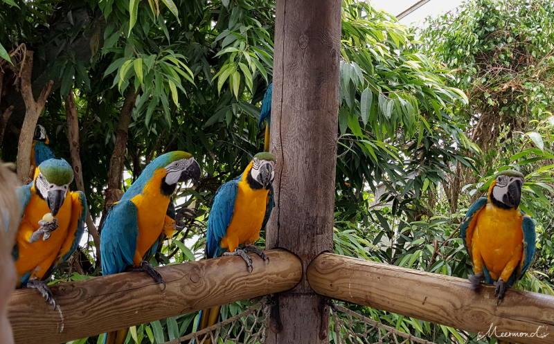 Papageien auf einer Stange