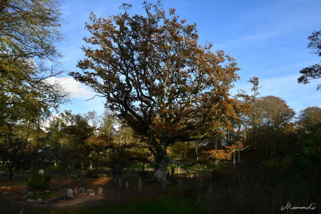 Boolsens Steingarten