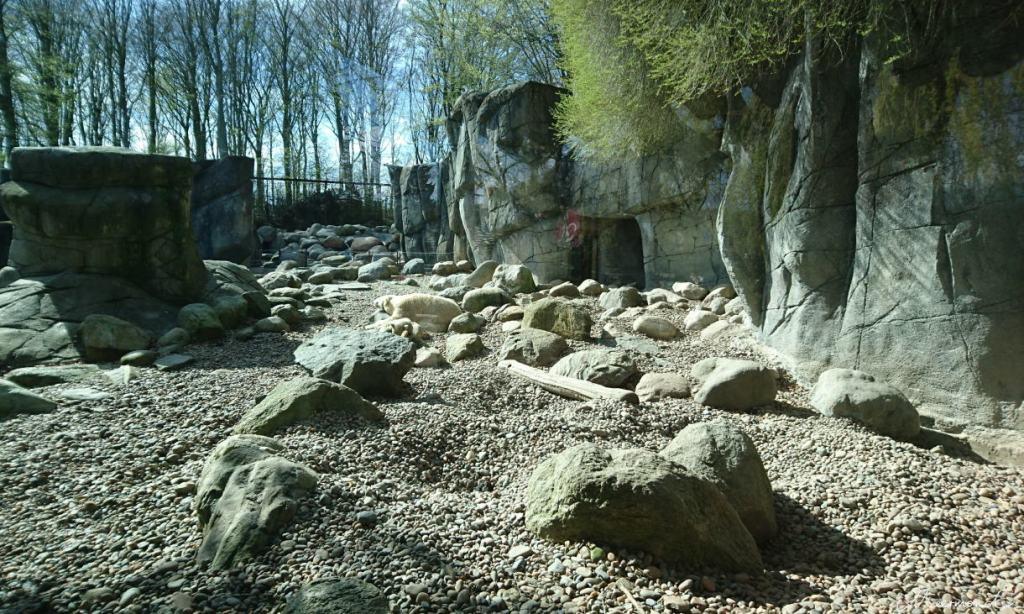 Aalborg Zoo Eisbärgelände