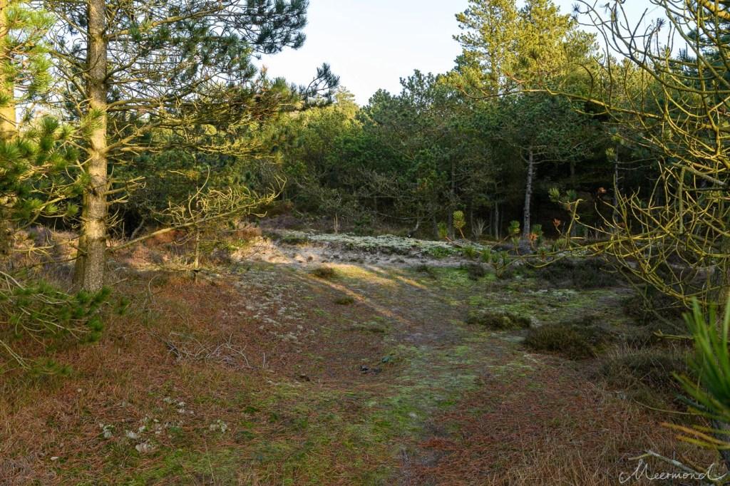 Wald auf Rømø