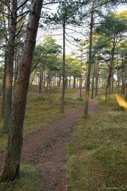 Wanderwege auf Rømø