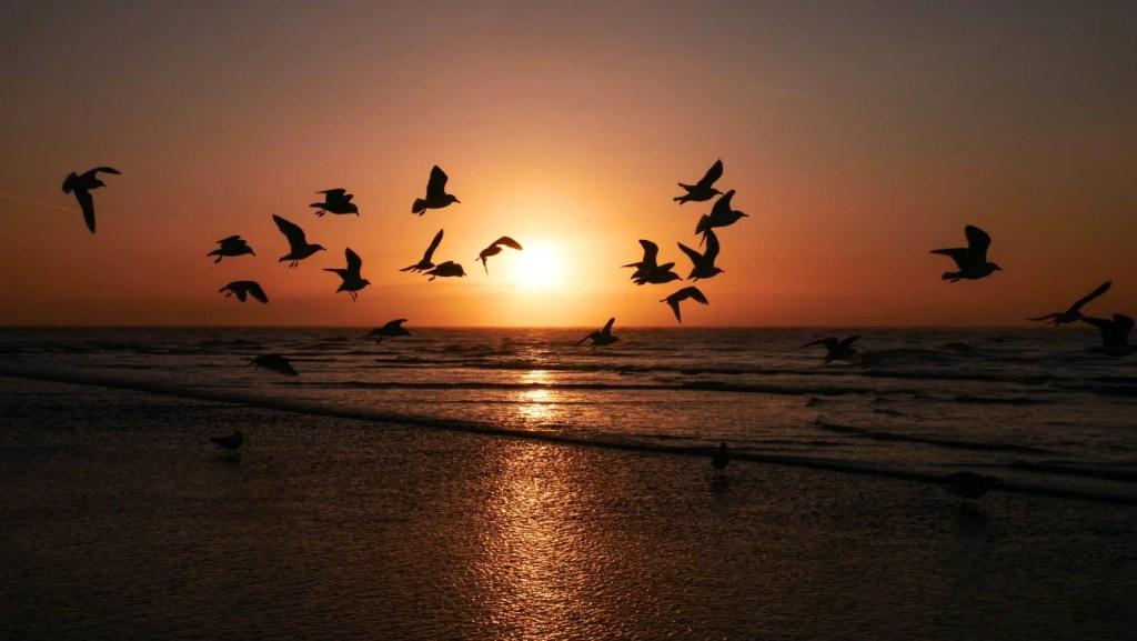 Sonnenuntergang mit Möwen am Strand im Winter