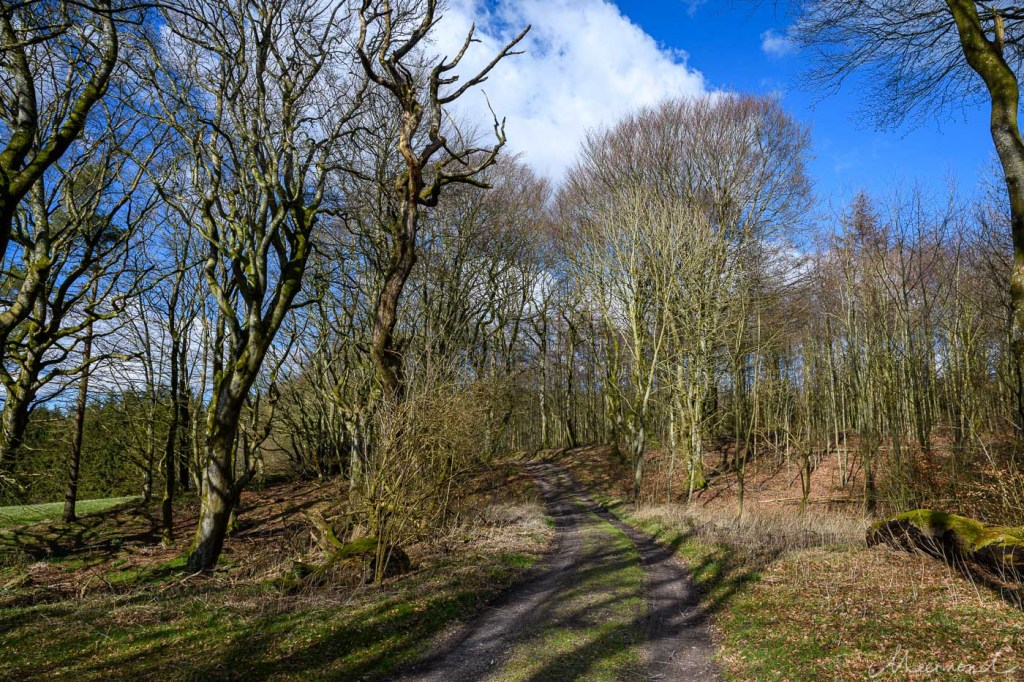 Weg in den Rold Skov