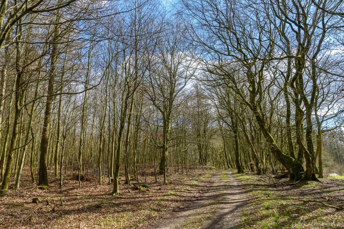 Baumriesen in Rold Skov