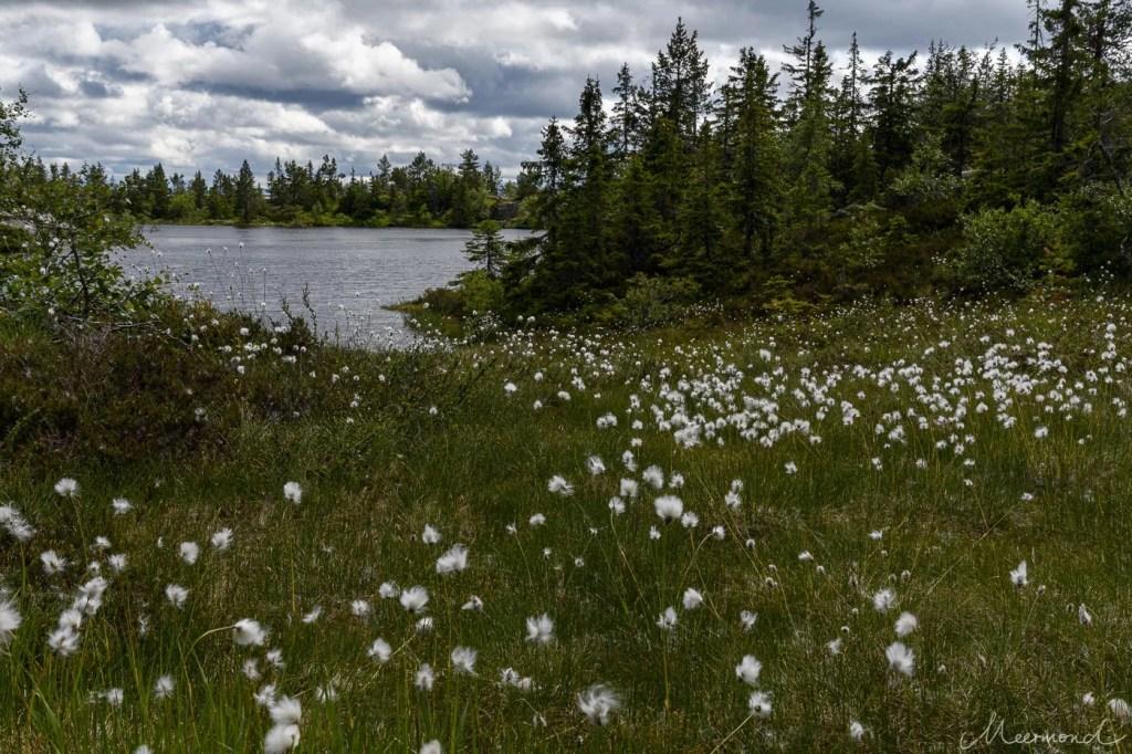 Norwegen See Wald Wollgras