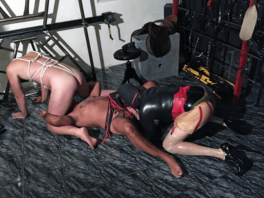 Three bi-slaves of which two are giving a blowjob