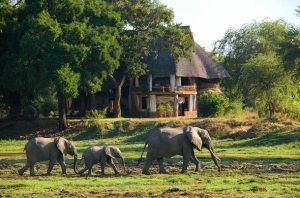 Tourism development with a strategy: Zambia focuses on sustainable game reserves