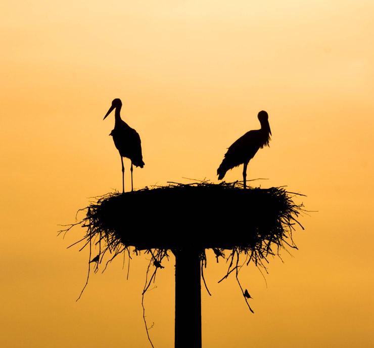 Birds In a Nest - Credit Unsplash