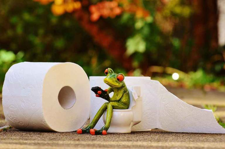Frog-on-the-toilet-Image-by-Alexas_Fotos-from-Pixabay-Optimised