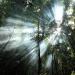 Smoke and sun in Sumatra Jungle