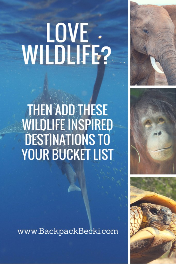 Love wildlife? You won't be able to resist adding these animal-inspired destinations to your bucket list. Read on some of the Worlds best animal experiences.