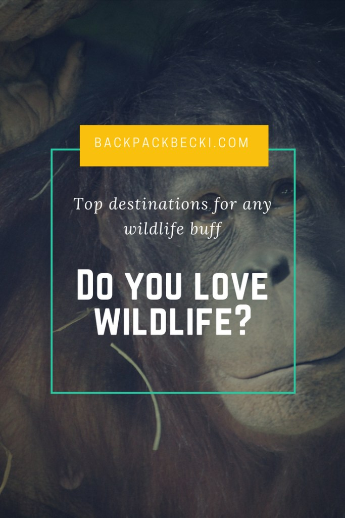 Do you love wildlife and travel? The worlds best animal destinations. Places to travel to for the best wildlife experiences. Bucketlist wildlife and animal destinations #animaldestinations #wildlifetourism #animals #WildlifeEncounters #BucketListDestinations #BestWildlife #TravelBloggers #Backpacking #TopWildlifeDestinations #BackpackBecki