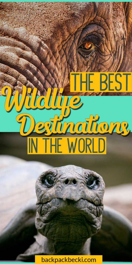 Top places in the world to experience animals and wildlife. Best wildlife travel destinations in the wild. If you love animals you NEED to add these places to your bucket list. Best places to visit to see wildlife as nature intended. Wildlife Trave and tourism destinations. #wildlife #naturalhistory #animals #wildlifedestinations #wildlifeexperiences