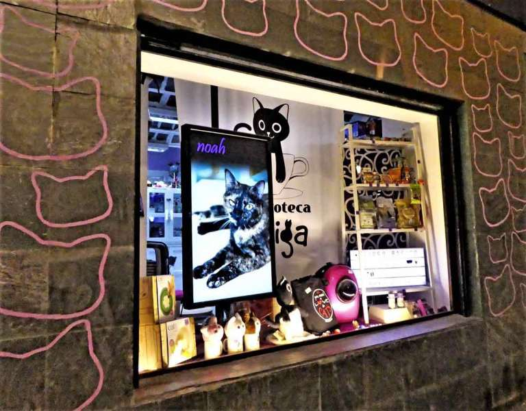 The-cat-cafe-in-Madrid-Optimised