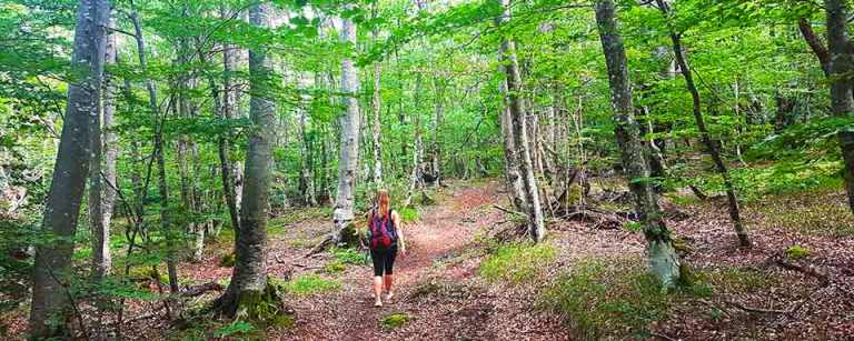 walking-through-the-wooded-area-on-the-Pljesivica-hike-Optimised