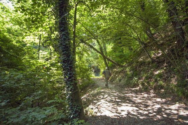 Ricerca del tartufo in un bosco delle Langhe