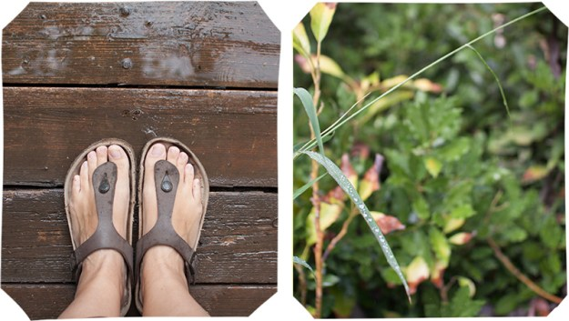 Collage of wet feet on the deck and herbs