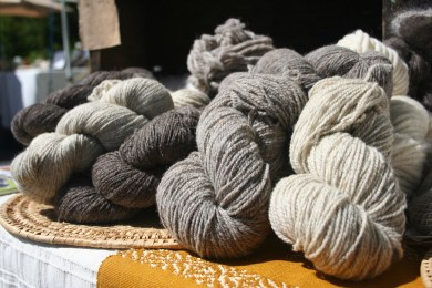 Bodega Pastures yarn