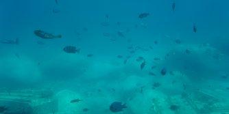 Fish in Cheonbu Underwater observatory