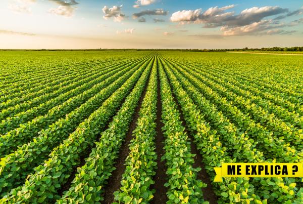 sustentabilidade ambiente agricultura natureza brasil