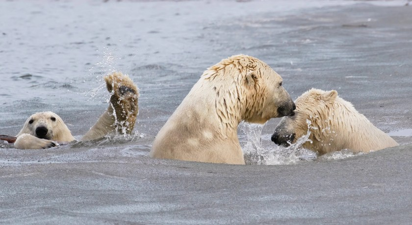 (Source: Cheryl Strahl - Comedy Wildlife Photography Awards 2021 / Reproduction)