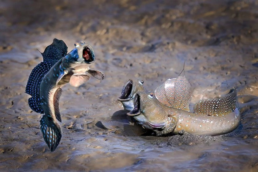 (Source: Chi Han Lin - Comedy Wildlife Photography Awards 2021 / Reproduction)