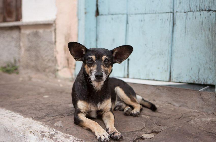 En Ituzaingó aprobaron un plan de esterilización para mascotas sin hogar