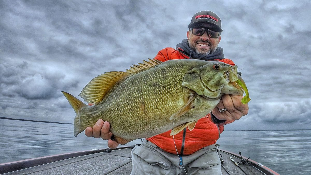 Cousvis-Hazedong-Shad-4pt2-Football-Smallmouth