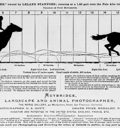 eadweard muybridge horse in motion infographic from 1878 [ 1300 x 790 Pixel ]