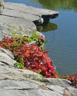 autumn 082