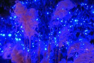 Winter Grass with Christmas Lights at Idaho Botanical Garden