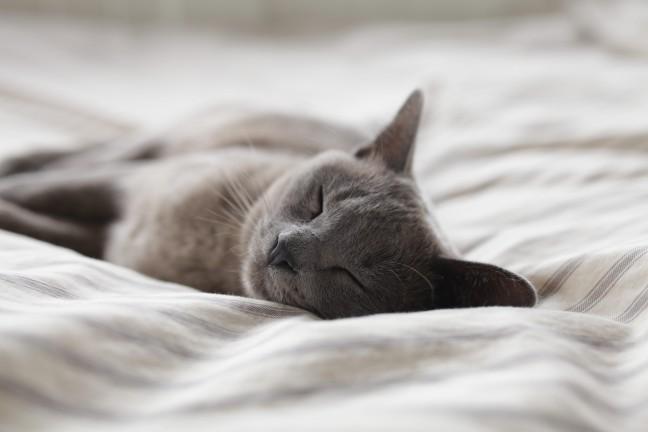 美肌生活習慣睡眠