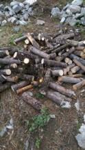 Lots of firewood chopped - six wheelbarrows worth!