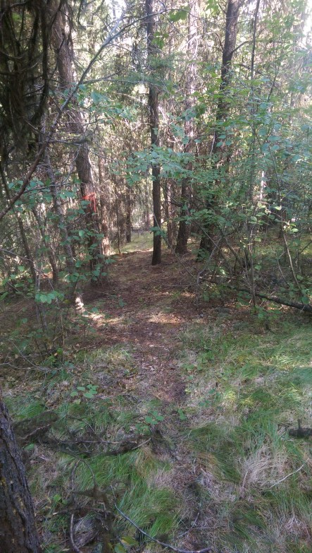 Trail building and clearing on the crown land above our property.