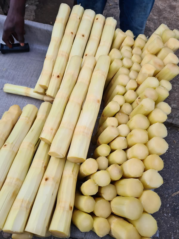 Sugarcane can boost sperm count, conception — Expert