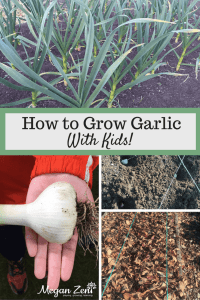 how-to-grow-garlic-with-kids