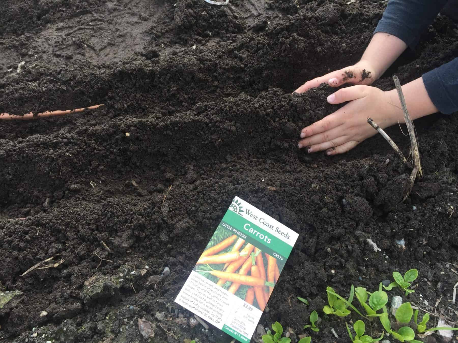 Grow Carrots With Kids