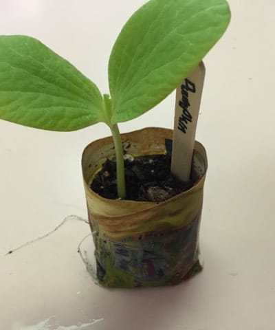 How to make paper seed pots