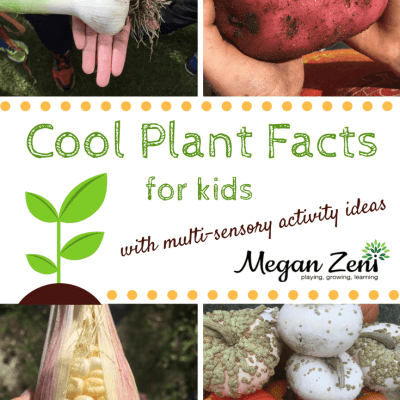 Cool Plants Facts For Kids