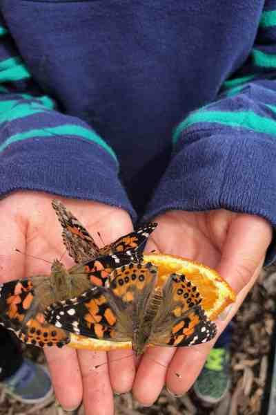 butterfly STEM