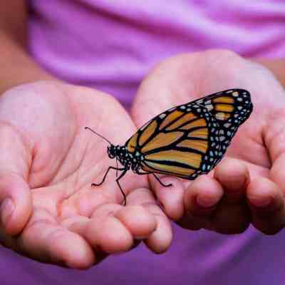 How To Plant A Butterfly Garden