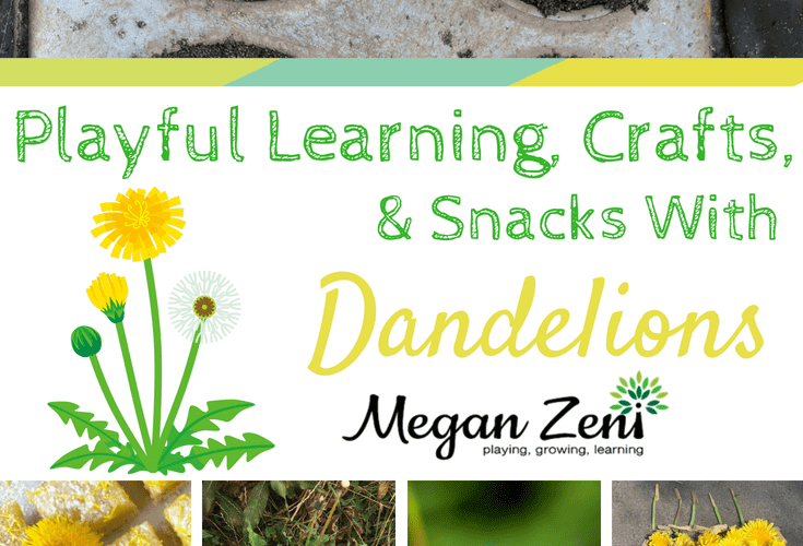 Playful Learning With Dandelions