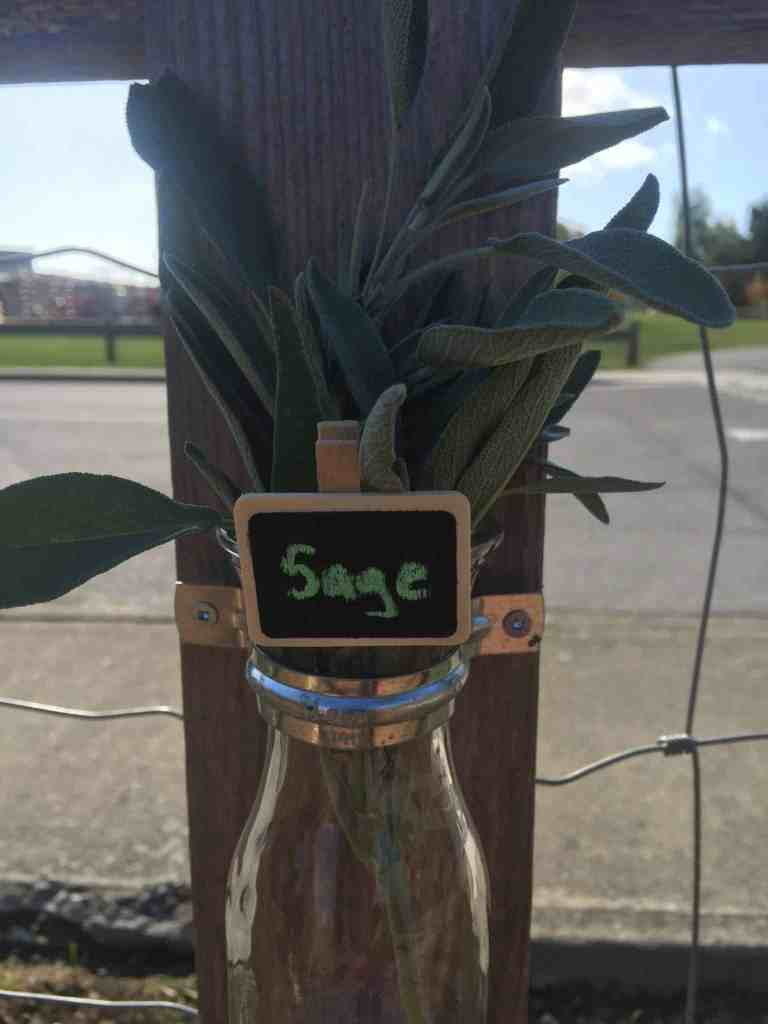 garden vocabulary vase