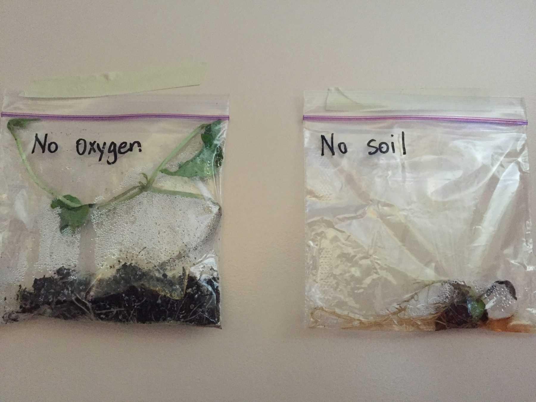 seed inquiry