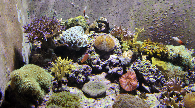 Coral Reef - Tennessee Aquarium