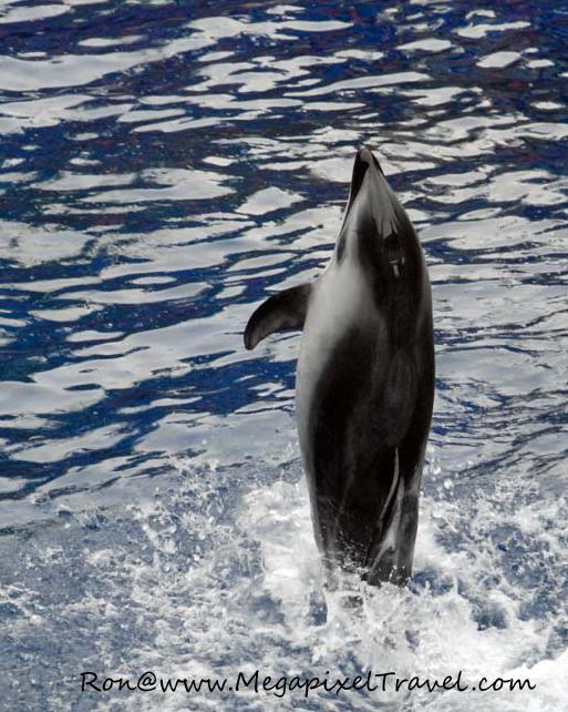 Vancouver Aquarium, Vancouver, B.C