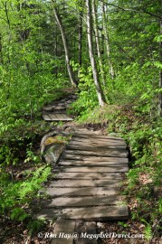 RON_3243-Marcy-Dam-trail
